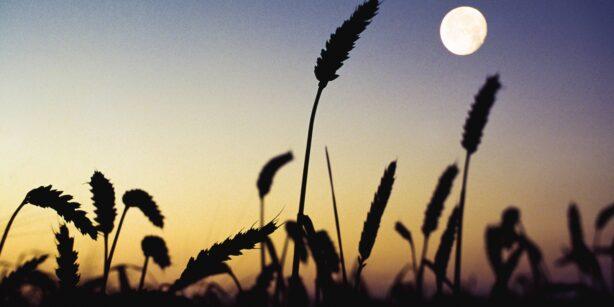 Der Mond im August: Der kostbare Erntemond