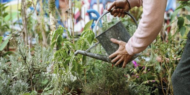Urban Gardening: Gärtnern in der Stadt