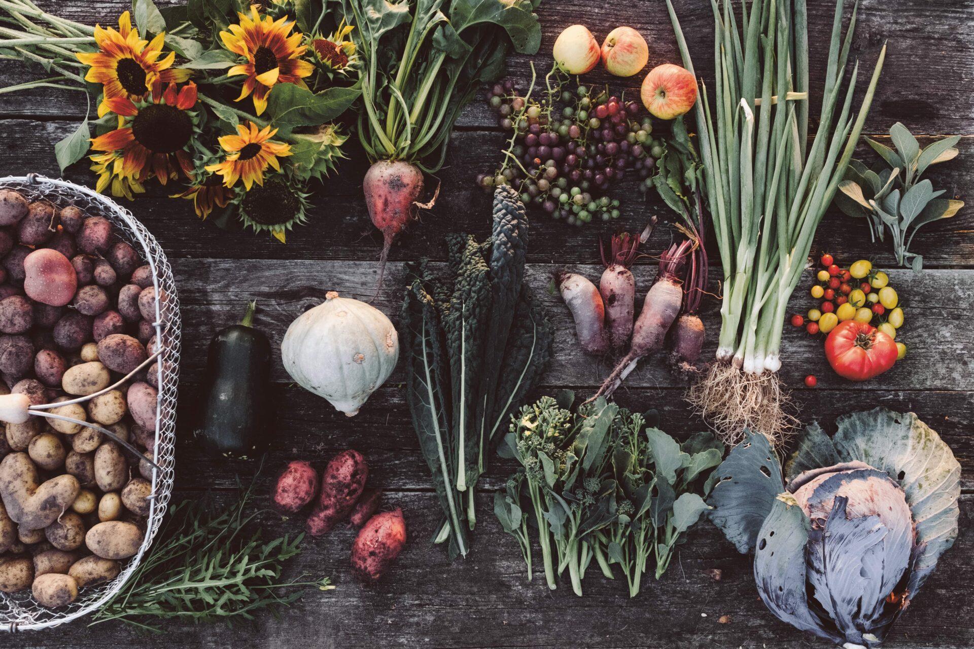 Gemüse auf dem Acker. Erde, Salz und Glut
