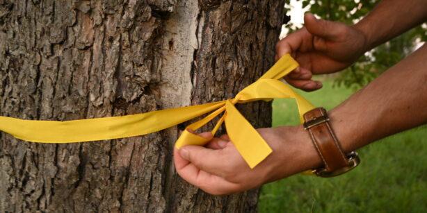 Gelbes Band an Bäumen entdeckt? Hier gibt's Obst für alle!