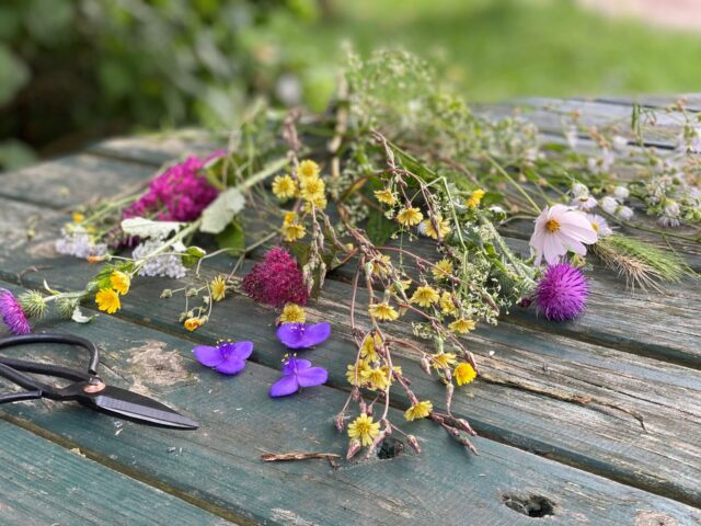 Gesammelte Wildblumen und Gräser