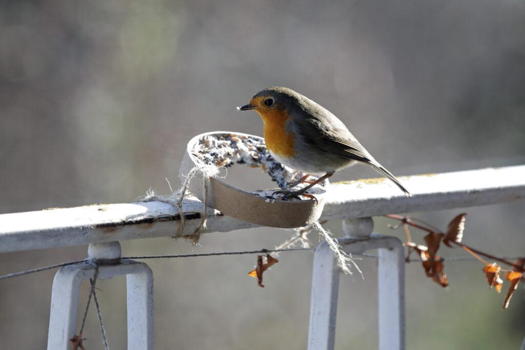 Vögel füttern: Natur ganz nah erleben