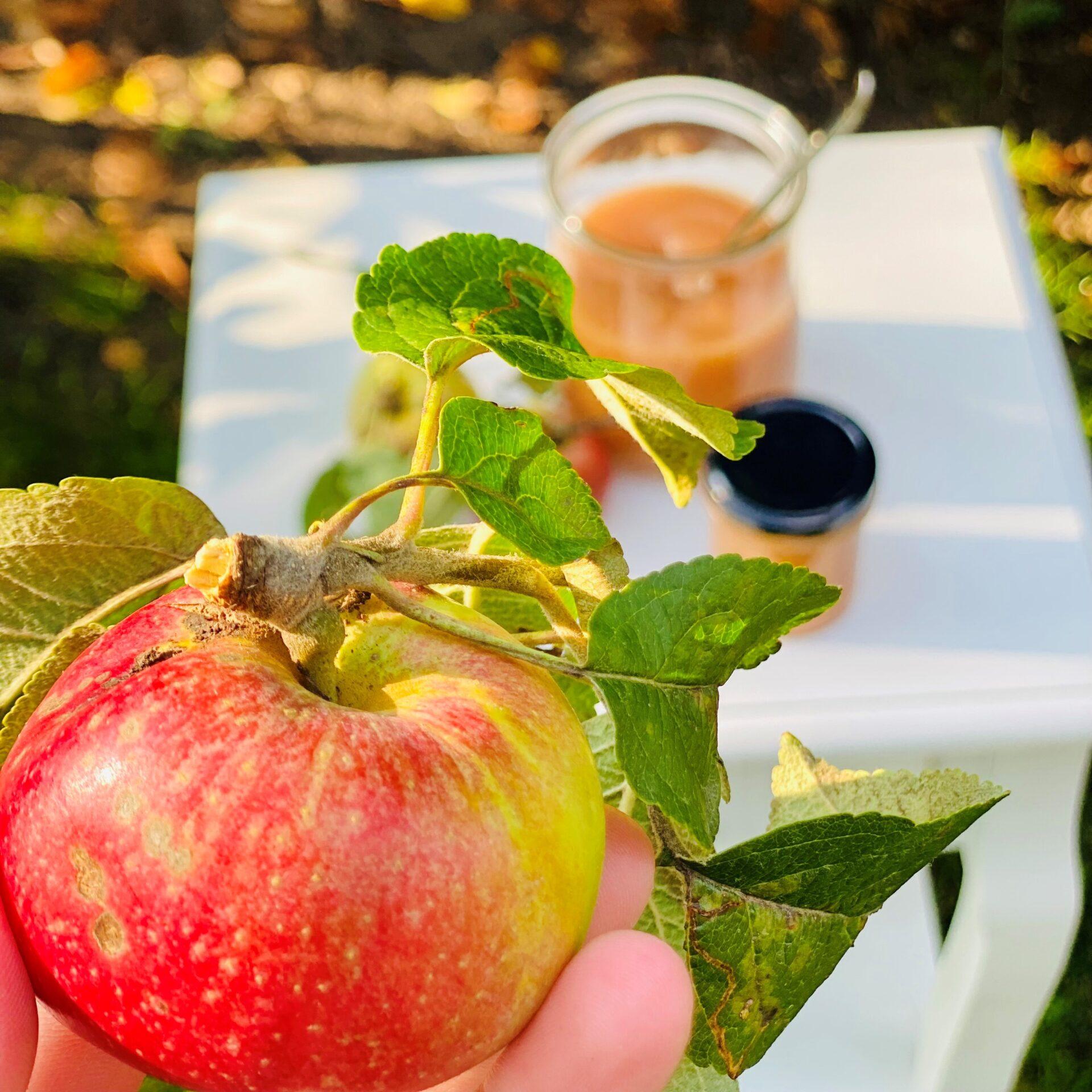 Ein roter Apfel im Vordergrund, Apfelmark auf einem kleinen Tisch im Hintergrund.