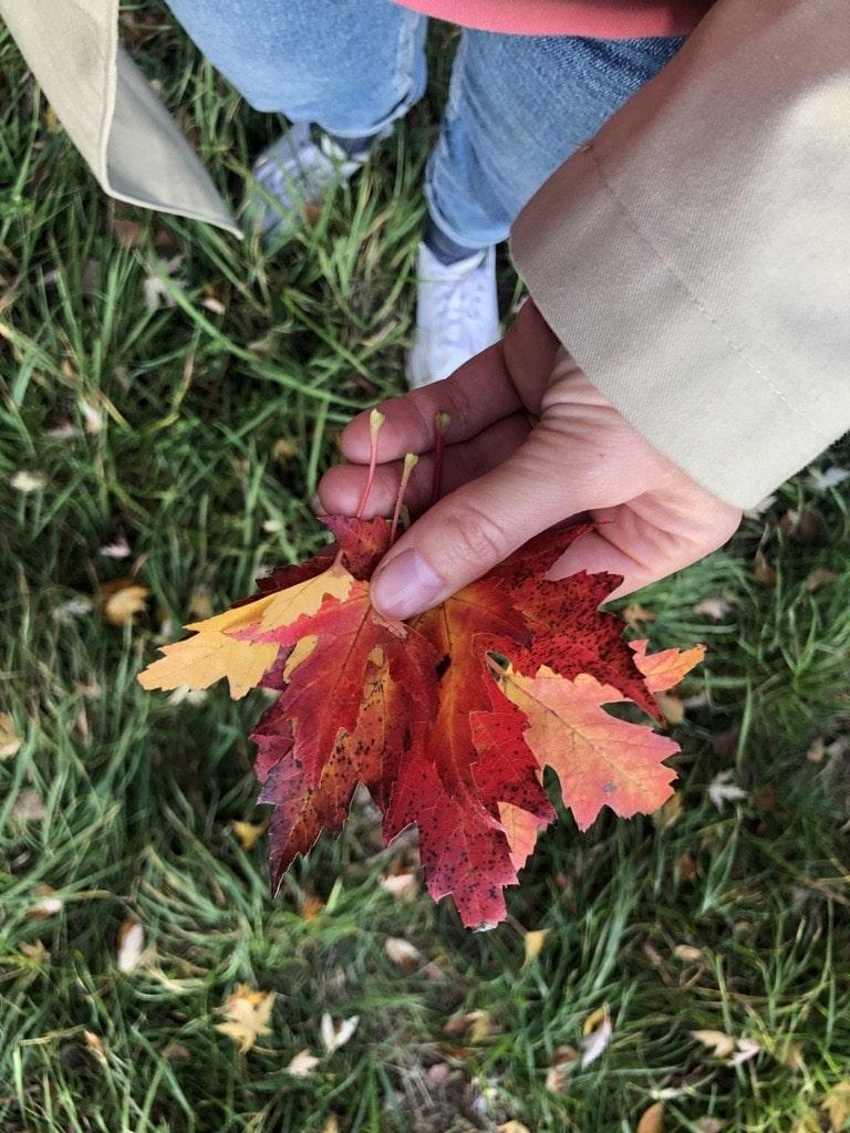 Herbst Bucket List. 33 Tipps für einen gemütlichen Herbst