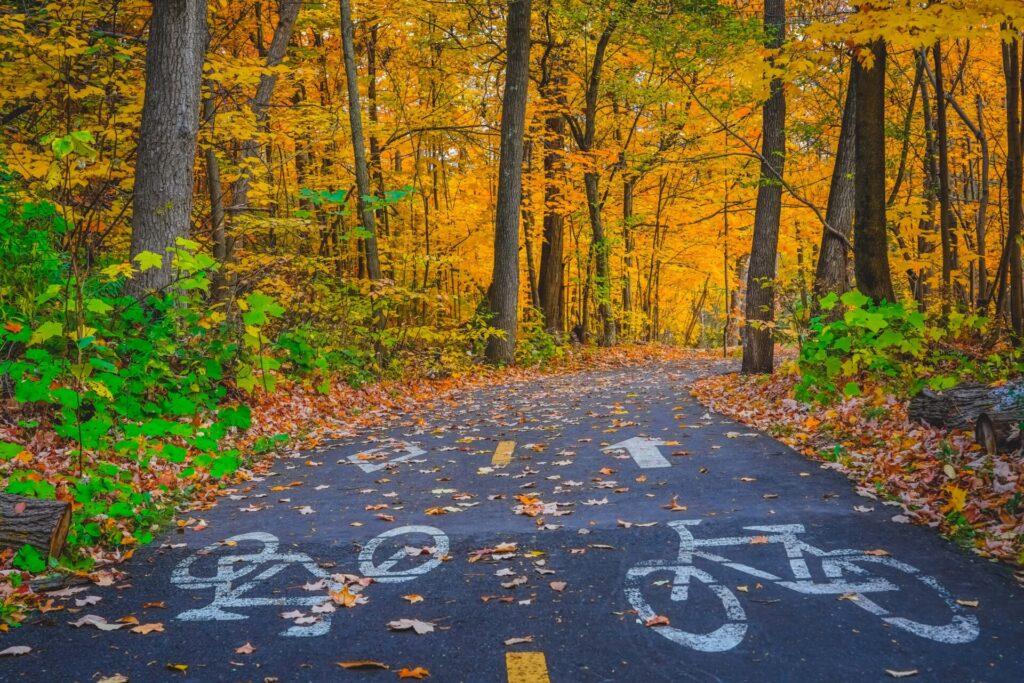 Ein Fahrradweg im Stadtwald ist bedeckt von goldenem Herbstlaub.