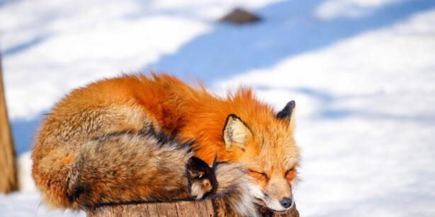 Der Winterschlaf naht: diese 7 Tiere verfallen nun dem Schlummern