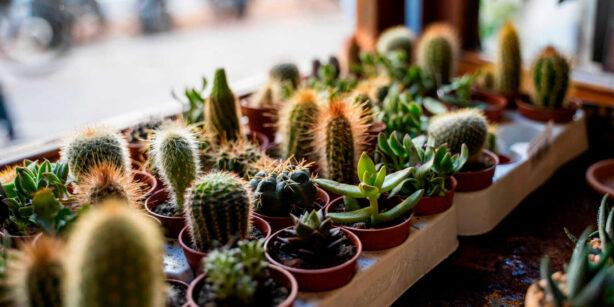 Sukkulenten vermehren: 4 Möglichkeiten zur Vervielfältigung eures Lieblings