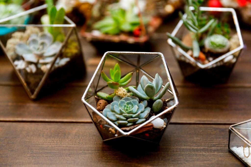 Kleine Sukkulenten in Glasschälchen sind sehr dekorativ.